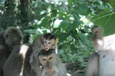 Monos de Ubud