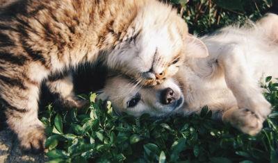 Mascotas mejores amigos