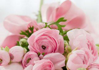 Envío de ramos flores con FloraQueen