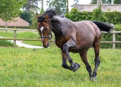 Las carreras de caballos en la cultura popular